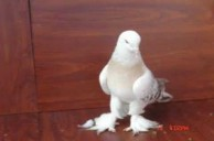 bulent bozoklu nun kuşları