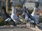 Güvercinlere  İsrail'den  füze