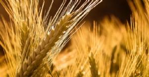 Buğday İthalatı Uyarısı