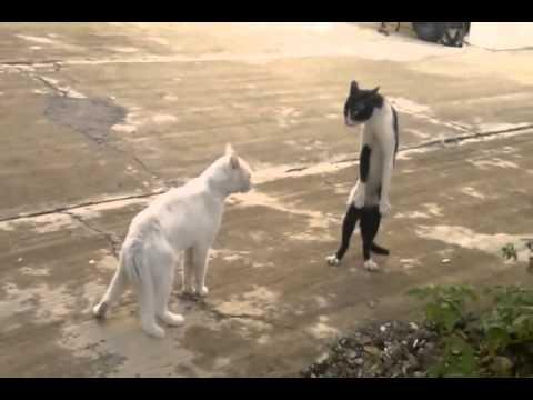Dünyanın En Komik 10 Kedi Videosu