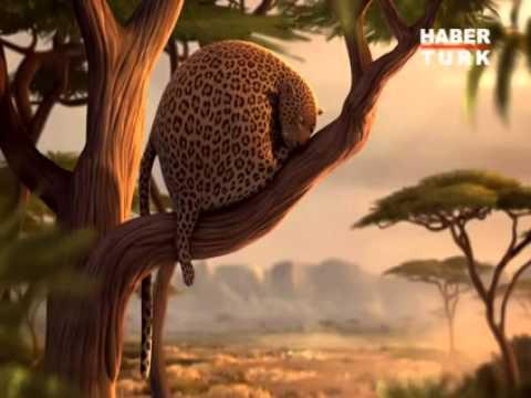 Eğer Afrika'daki Yabani Hayvanlar OBEZ Olsaydı… Süper Video…