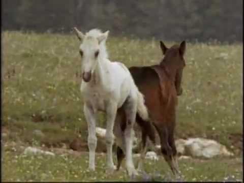 Vahşi Atlar Belgeseli izle – http://www.belgeselizle.web.tr