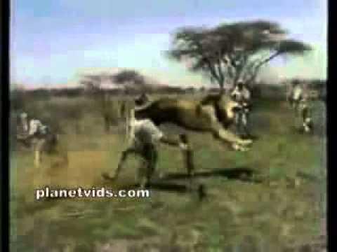 vahşi hayvanların insanlara saldırıları