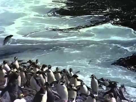 Antarktika – Belgesel (altyazılı)