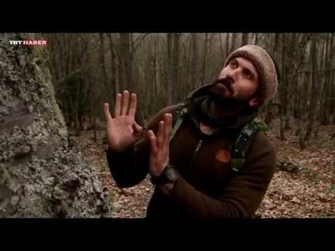 doğadaki insan 24. bölüm (Serdar Kılıç)