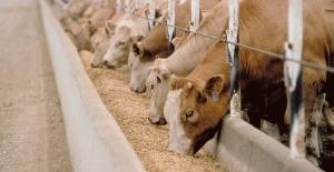 Hayvancılık Destekleri Onaylandı