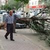 Karaman da Şiddetli Rüzgar Ağaçları Devirdi